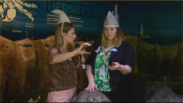 SEA LIFE Aquarium celebrates 'Jawsome July,' dedicated to shark awareness