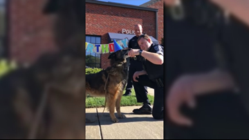 Mount Holly K9 officer celebrates 9th birthday with some ice cream