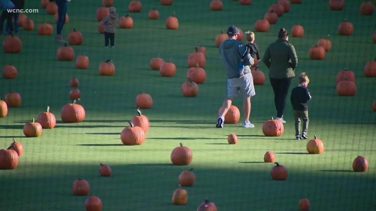 Truist Field to transform to a pumpkin patch next weekend