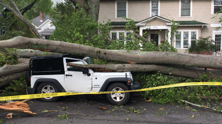 tree on jeep