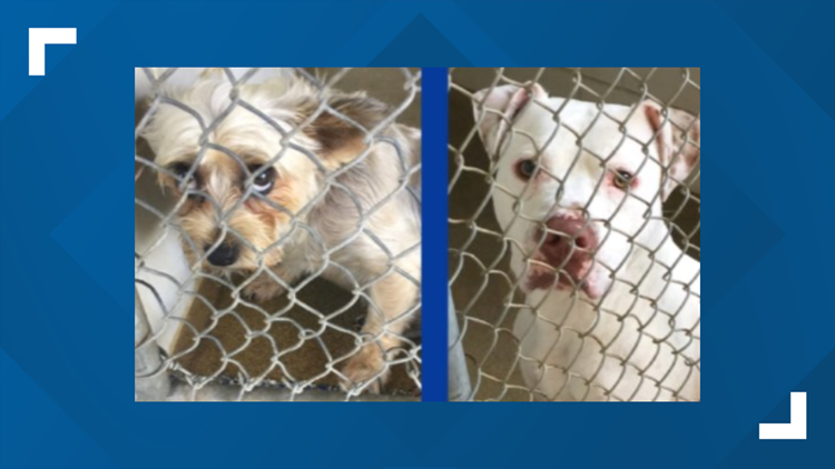 Animal Care and Control at max capacity for canines, said CMPD