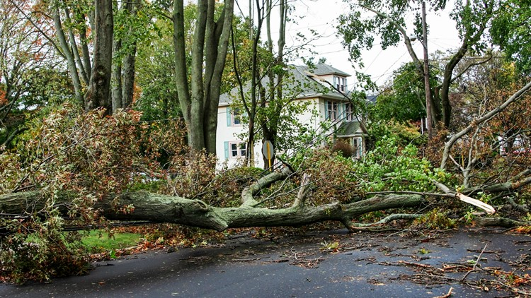 What to do when a tree falls in your yard or neighborhood