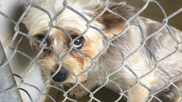 Help Clear The Shelters on Saturday for adoption day