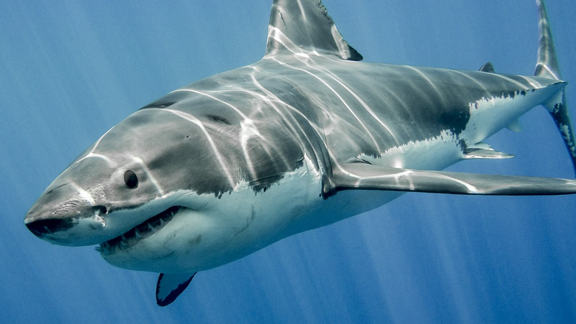 Shark Week: Your chances at a real-life shark encounter are actually very low