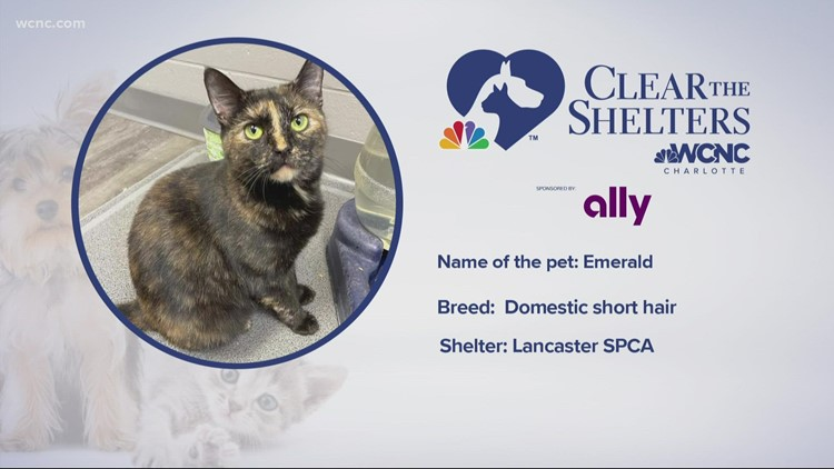 Animals in desperate need for a forever home, help  Clear the Shelters