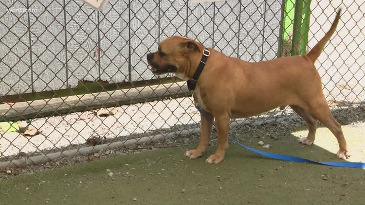 Clear the Shelters: Matching adoptable pets with the right homes