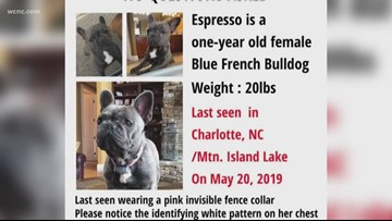 100 days later, Charlotte family still searching for missing French bulldog