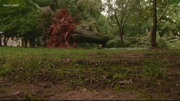 Storms down massive tree in Charlotte
