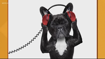 Spotify now has playlists for pets