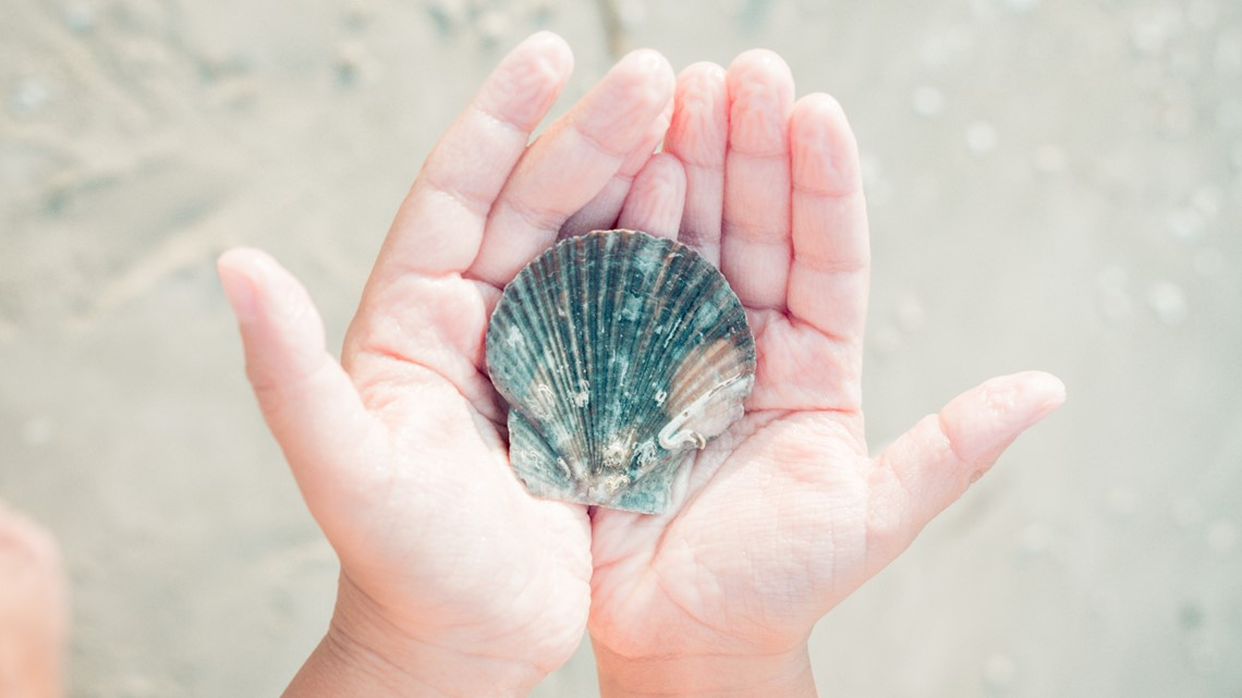 Why you should avoid buying seashells at souvenir shops this summer