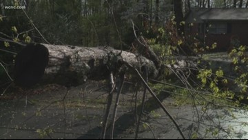 Cleanup begins after powerful storms take down trees, power lines across Carolinas