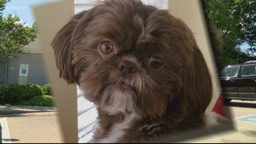 Dog euthanized to be buried with owner in Virginia