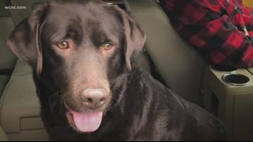Man goes viral after effort to find missing dog's owner