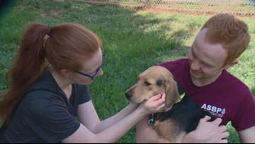 'Look at those empty kennels!' | Dozens of pets find new homes during Clear the Shelters in Charlotte area