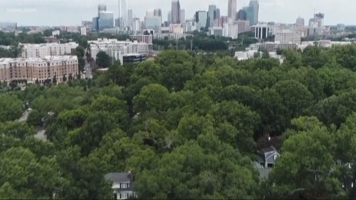 How has Charlotte's tree canopy lasted compared to other cities?