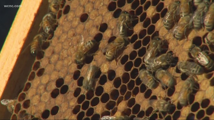 VERIFY: Yes, certain sprays to kill mosquitoes can also kill honeybees