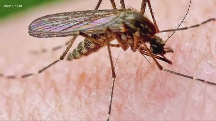 West Nile virus found in mosquito in Mecklenburg County: What does that mean for us?