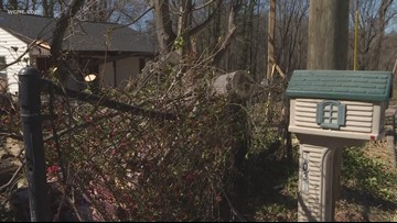 Person purposely cut down tree, damaged homes, power lines, police say