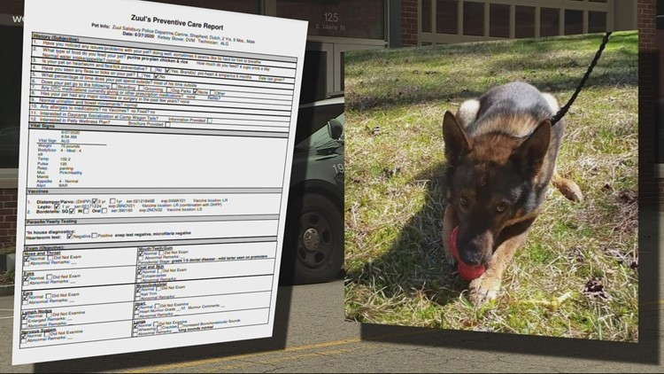 Vets determine K9 Zuul 'in good health' following viral training incident