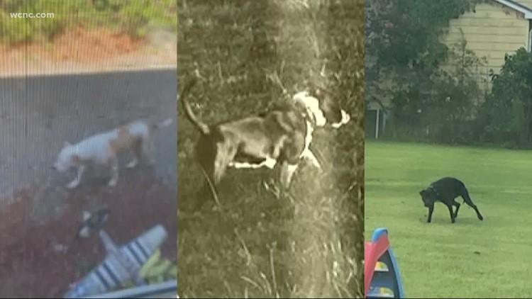 Rowan County family worried about loose dogs wandering around neighborhood
