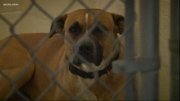 Dog euthanized after mauling, killing baby in Salisbury