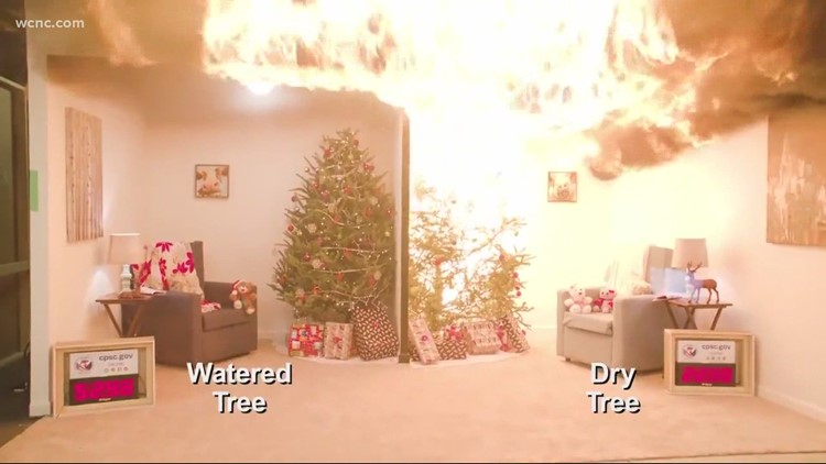 Fire Safety: What to know about taking care of real Christmas trees