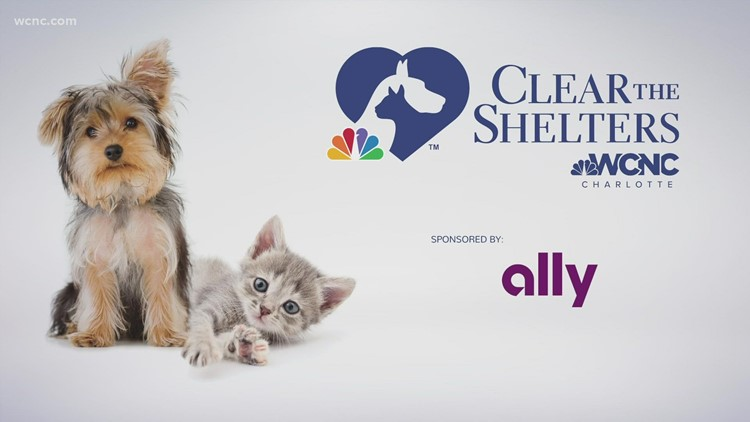 Clear The Shelters: Urgent need for adoptions in Charlotte