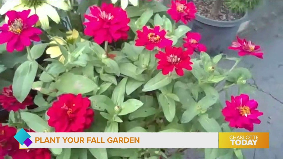 Plant Your Fall Garden With Help From