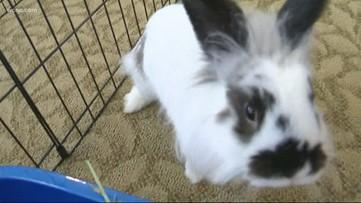 Bunny Rabbits bring comfort to seniors