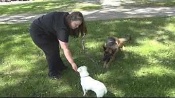 Owner, dogs form unbreakable bond through cancer battles