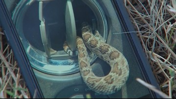 Texas man finds rattlesnake in truck's air vent