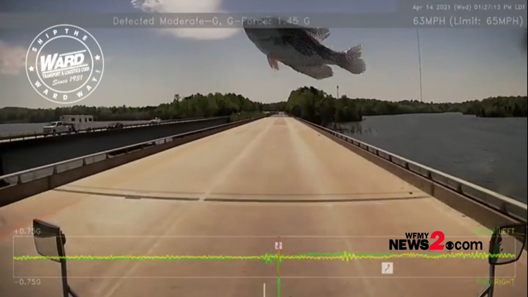 What in the fish?! Fish smacks trucker's windshield after dropped by bird over I-73