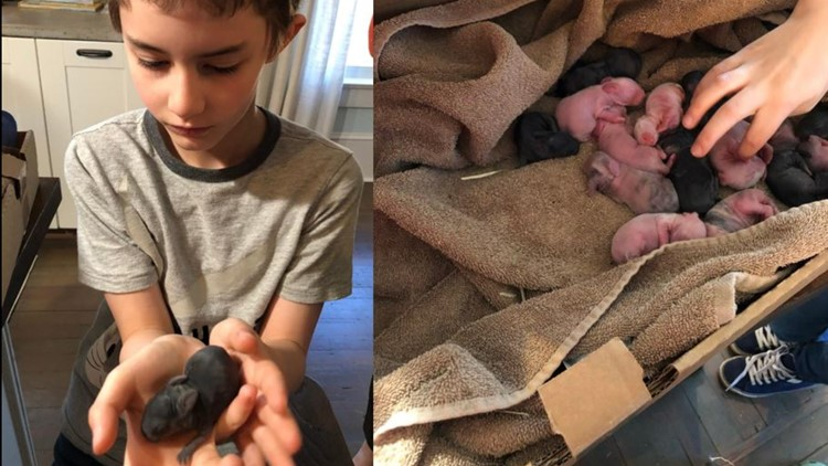 24 baby bunnies born in NC unofficially ties world record