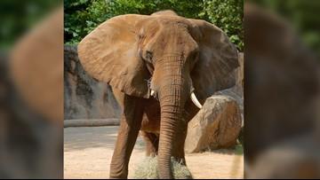 Riverbanks Zoo elephant unexpectedly dies