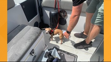 Dog named Dorian rescued from waters of Florida marina ahead of hurricane