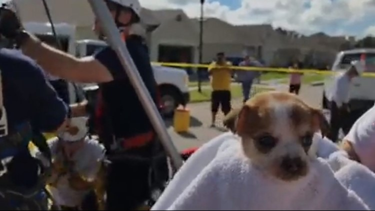 Winter Haven fire officials rescue puppy stuck in a storm drain