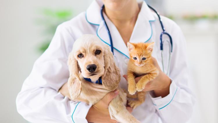 Nationwide veterinarian shortage felt in South Carolina