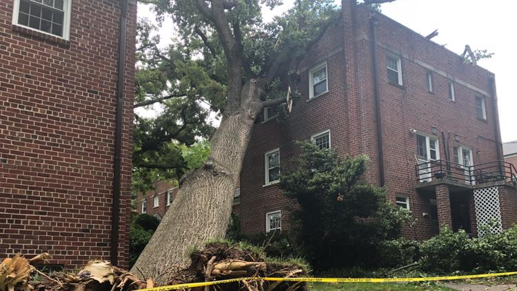 VERIFY: Yes, you get the bill if a neighbor's tree hits your house, unless you do this one thing