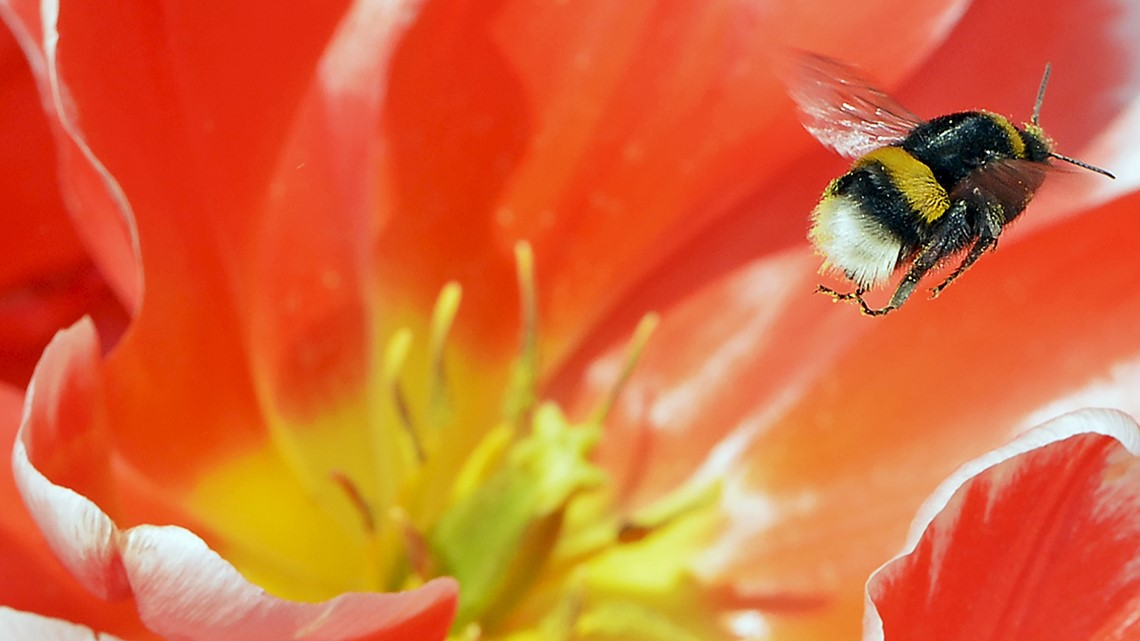 Buzz off climate change, heat threatens bees   Climate highlights of the week