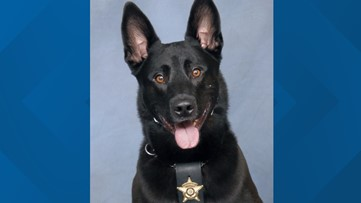 Confusing, chaotic scene leads to shooting death of K-9 officer by deputy