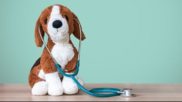 Keeping your pets safe this back to school season